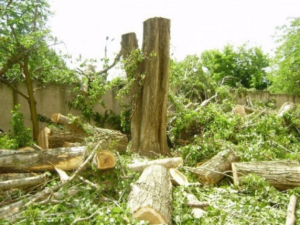 Вырубка и обрезка деревьев
